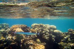 The Red Sea Shorev