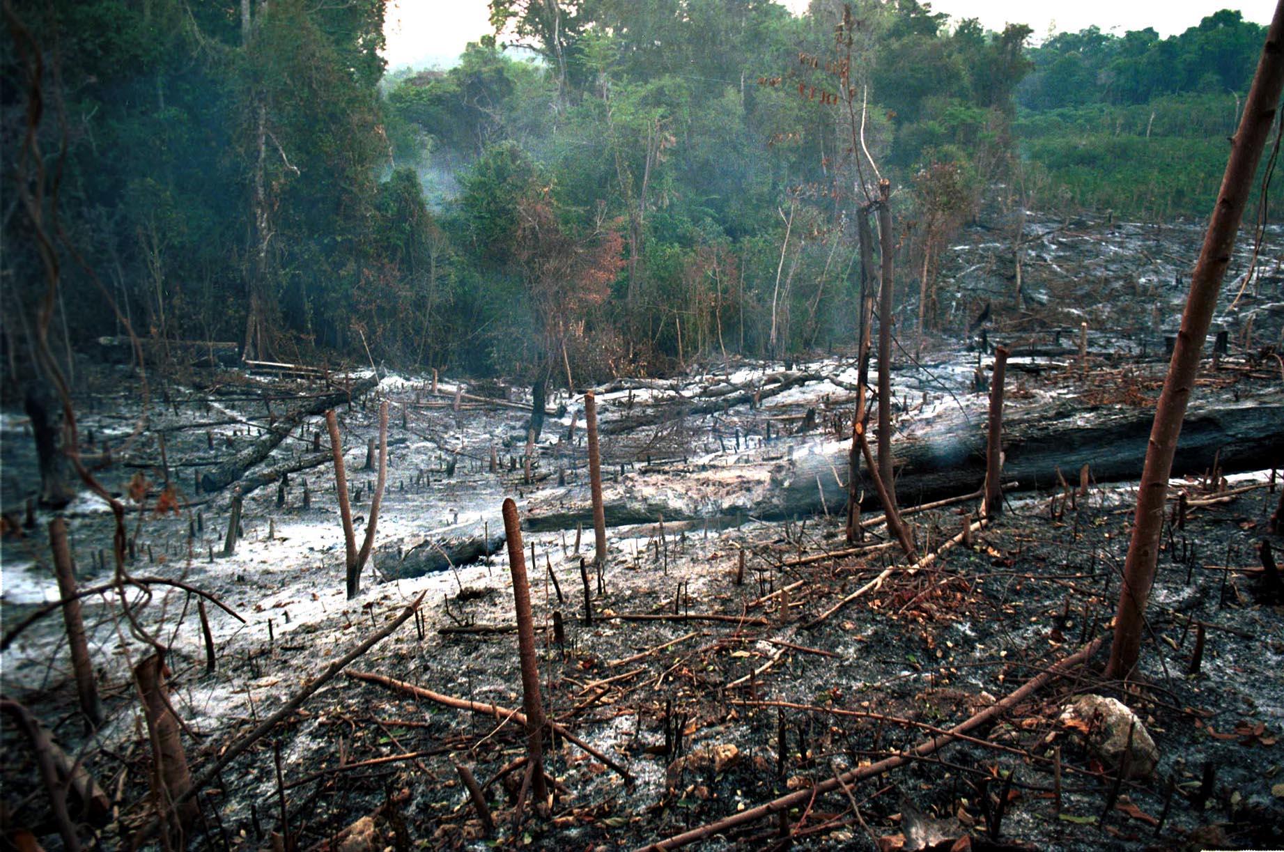 Rainforest squatters, AFP
