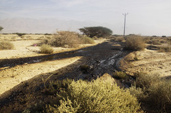 Catastrophic Negev Oil Spill