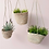Thumbnail: Cup and Saucer Plant Hanging Baskets