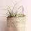 Thumbnail: Plant Hanging Basket