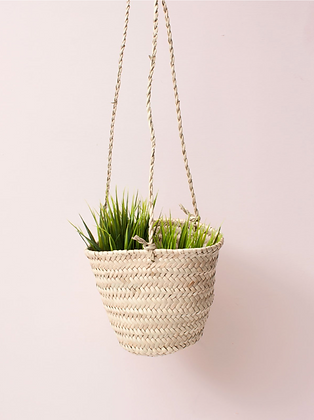 Cup and Saucer Plant Hanging Baskets