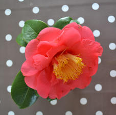 Fleur de point 2.JPG