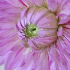 Violet de fleur 1.JPG