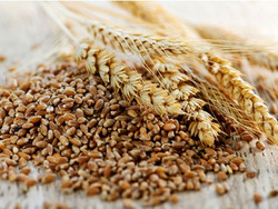 Glycemic Control and Fiber Intake