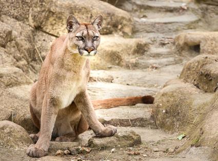 Viktoria BIG CAT SANCTUARY