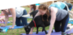 3-2 Goat Yoga.png