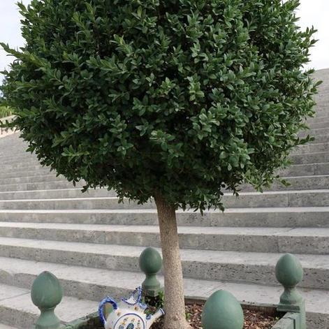 thirtsty-tree.jpg
