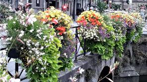Flowers along the River.jpg