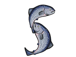 Salmon S