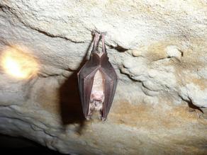 Morcegos e o efeito Doppler