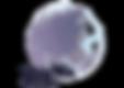 MyWHA logo.png