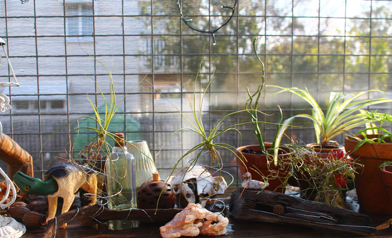 Upcycled air plant displays