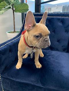 Jules Balenciaga Dog 4.jpg
