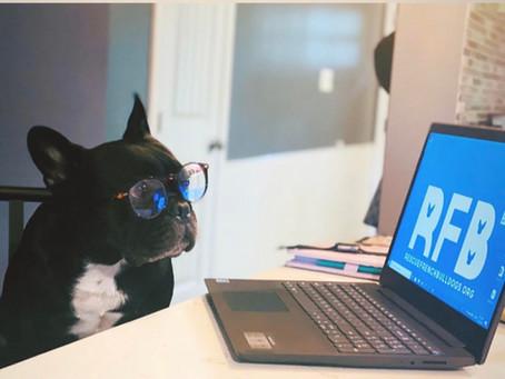 Rescue French Bulldog Donations