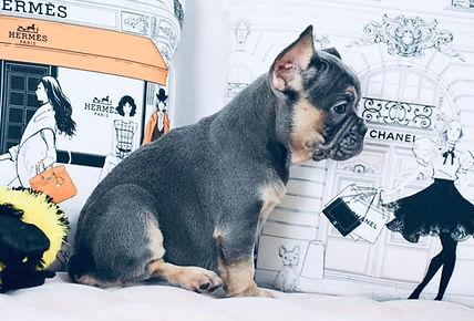 Mike Casabic Dog.jpg