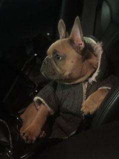 Jules Balenciaga Dog 2.jpg