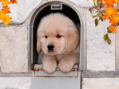 Easy Ways to Potty Train your Puppy