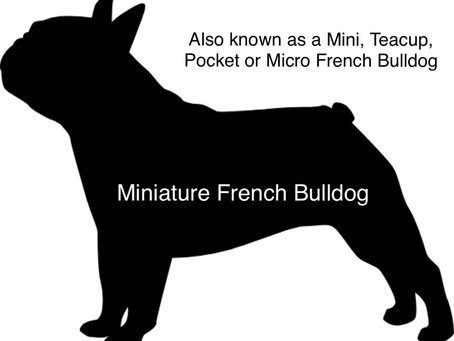 Do Miniature or Micro French Bulldogs Exist?