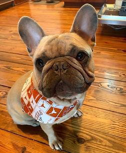 Brooke Workman Dog.jpg