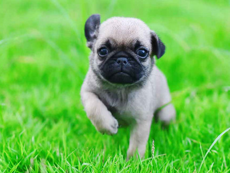 10 Most Popular Dog Names!