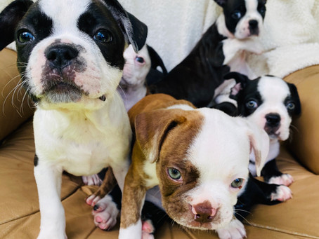 Magnificent 7! **ALL PUPS ADOPTED**