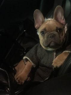 Jules Balenciaga Dog 3.jpg