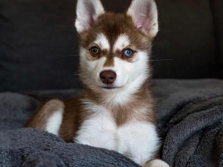 5 Simple ways to treat puppy dandruff