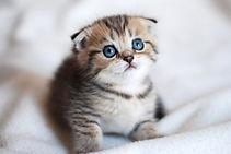 猫01_edited.jpg