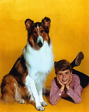 Jon-Provost-Lassie