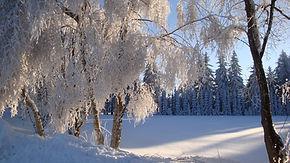 Winterlandschaft Rauhreif.jpg