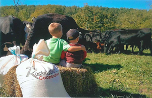 Cattle & Kids.png