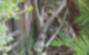 Screen Shot 2020-03-06 at 8.33.44 AM.png