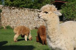 Gite Ardèche animaux lilodahuA9805