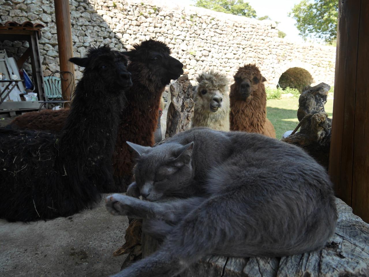 Gite Ardèche animaux lilodahu