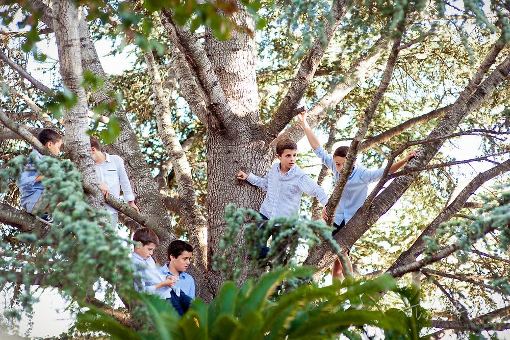 niños subidos a un árbol ceremonia Mas Folch boda Fotografía documental Destination wedding photographer Tarragona  Barcelona