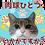 Thumbnail: スプリングセット2 ↑