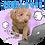 Thumbnail: スプリングセット3 ↑