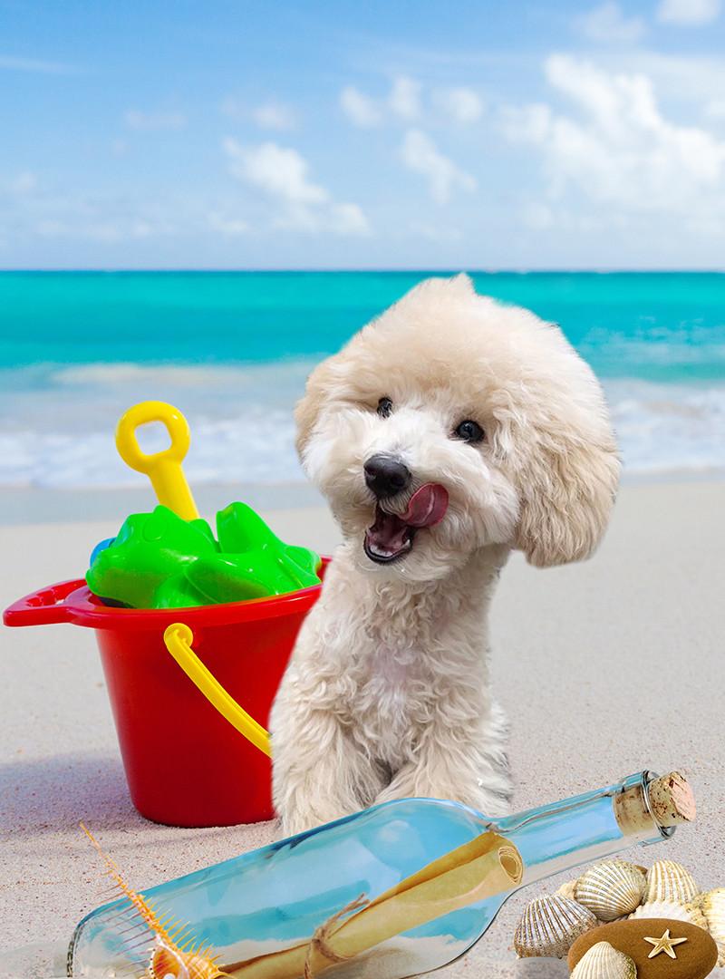 海岸で遊ぶG.jpg
