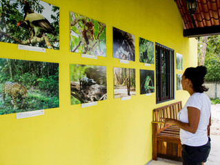 Exposición, Calakmul Biodiverso