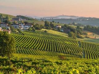 Barolo şaraplarını daha yakından tanıyalım.....