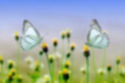 butterfly-1127666_1920 (1).jpg