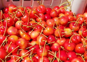 Cherry prices remain strong