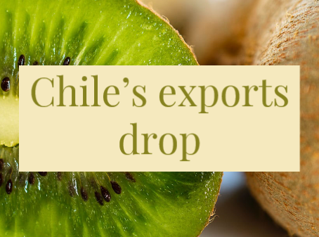 Kiwifruit prices return to normal levels