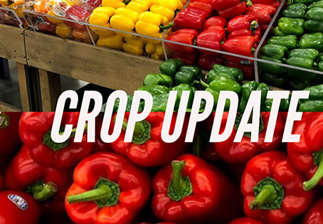 Mexico takes larger share of U.S. bell pepper market in 2020
