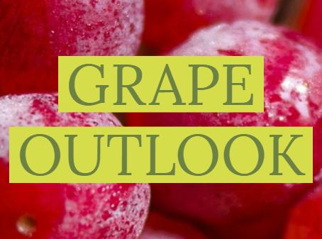 Grapes endure pandemic struggle