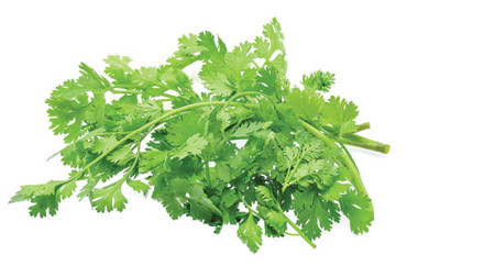 Cilantro prices on the rise