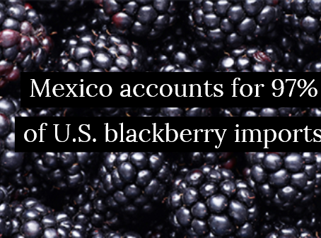 Blackberry prices on the rise