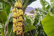 Going Bananas.jpg