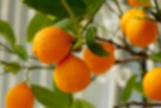 fruit-3301955.jpg
